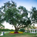 The Willow Tree Lawn
